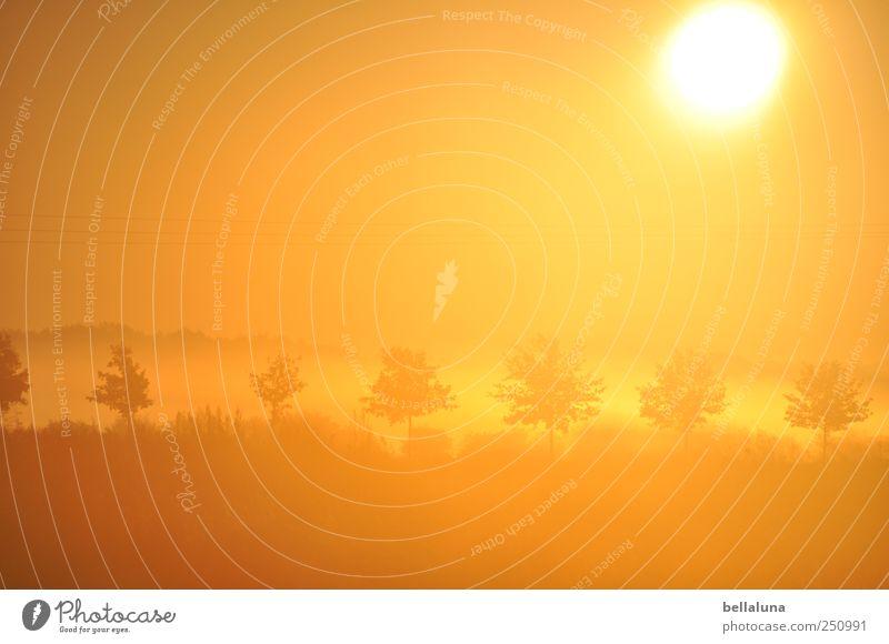 Kurz vor 28 Grad... Himmel Natur Baum Pflanze Sonne Herbst Gras hell orange Nebel Schönes Wetter Allee Wolkenloser Himmel Wildpflanze