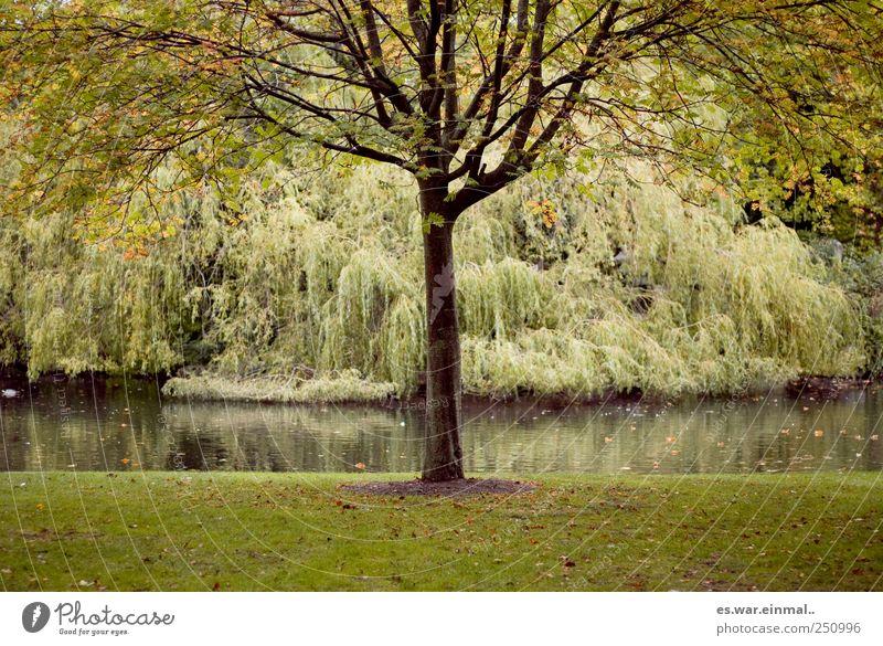 in éire. schön Baum Wachstum Sträucher