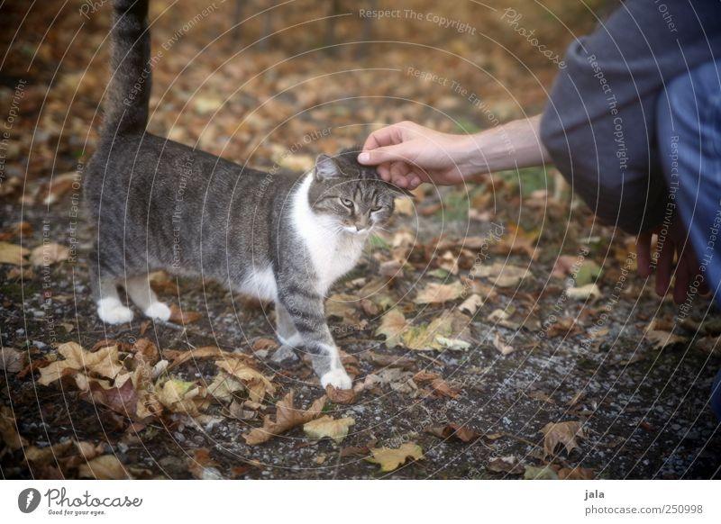 CHAMANSÜLZ | köpfsche geben Mensch Hand Tier Katze Arme Tierliebe
