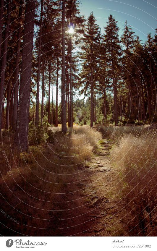 Wald und Wiesen Bild Landschaft Herbst Schönes Wetter Wege & Pfade wandern blau braun Erholung Natur Nadelwald Fichtelgebirge Farbfoto Außenaufnahme
