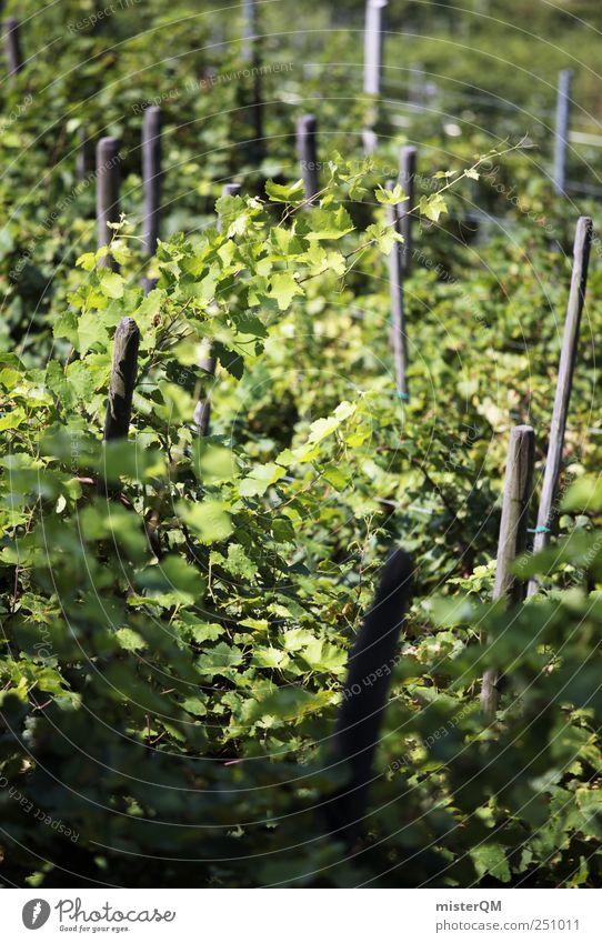 Grüner Kult. Umwelt Natur Landschaft Klima Sinnesorgane Wein Weinberg Weinlese Weinbau grün Italien reif Berghang Pflanze Farbfoto Gedeckte Farben Außenaufnahme