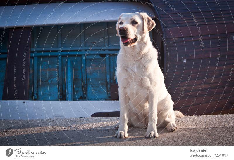 Einmal freundlich lächeln :-) Freizeit & Hobby Spielen Ferien & Urlaub & Reisen Tourismus Ausflug Beiboot Ruderboot Hafen Tier Haustier Hund Tiergesicht Fell