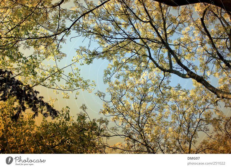 Der Herbst #001 Himmel Natur blau Baum Sommer Ferien & Urlaub & Reisen Blatt Wald Umwelt Gefühle Frühling Stimmung Park orange Spaziergang Warmherzigkeit