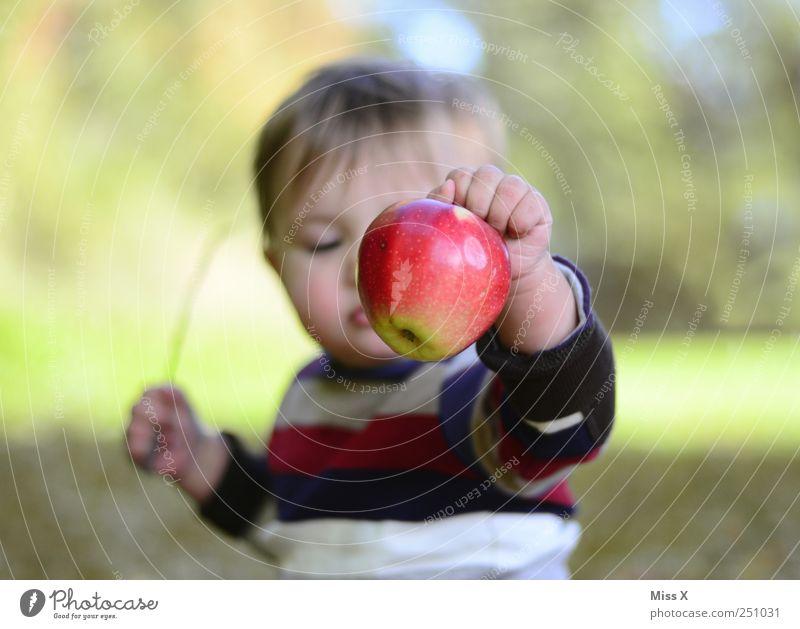 rotbackig Kind Mensch Ernährung Garten Lebensmittel Gesundheit Kindheit Baby Frucht frisch süß Apfel Kleinkind Ernte Gesunde Ernährung