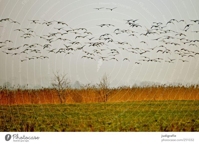 Auf gehts Himmel Natur Pflanze Tier Wiese Umwelt Landschaft Gras Küste Vogel fliegen Beginn wild natürlich Wildtier Tiergruppe