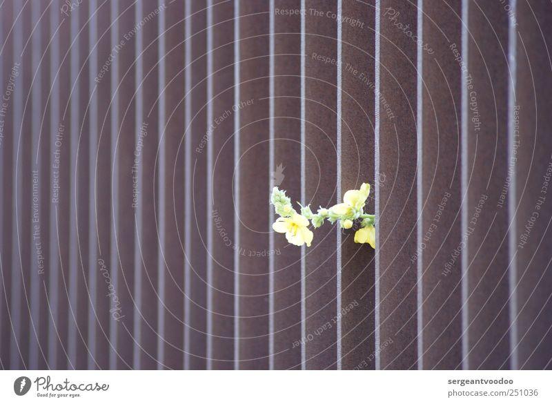 ...break on through to the other side... Umwelt Pflanze Blume Blüte Fingerhut Metall Linie Streifen Blühend Wachstum ästhetisch Duft frei Unendlichkeit schön