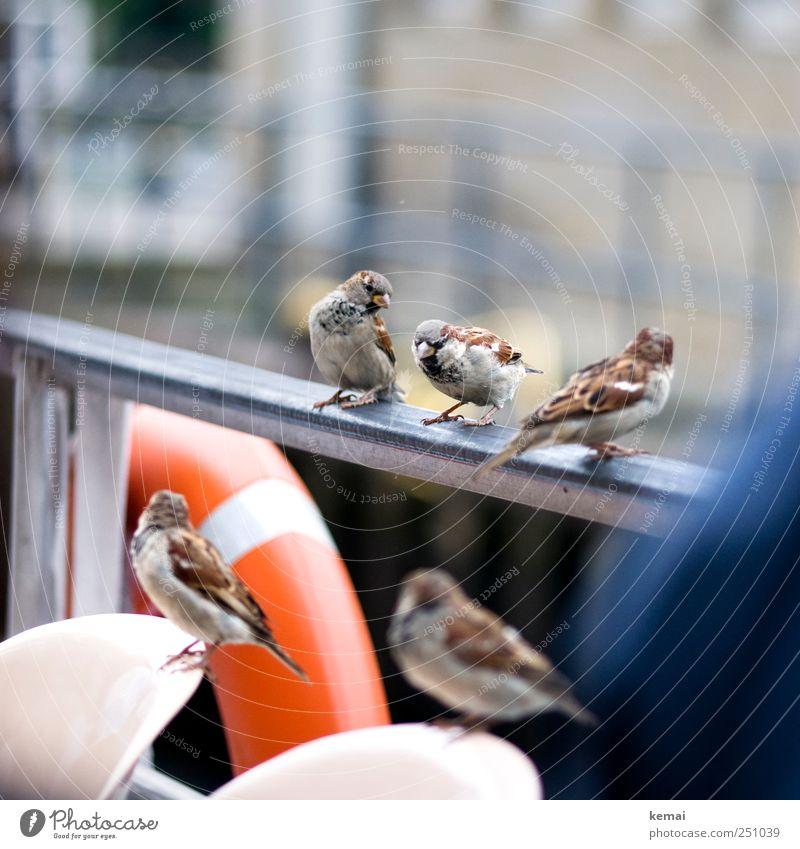 Jungs-Ausflug Tier Umwelt Freundschaft Vogel Zusammensein sitzen maskulin natürlich Wildtier Tiergruppe niedlich Flügel Neugier Geländer Schifffahrt Schnabel