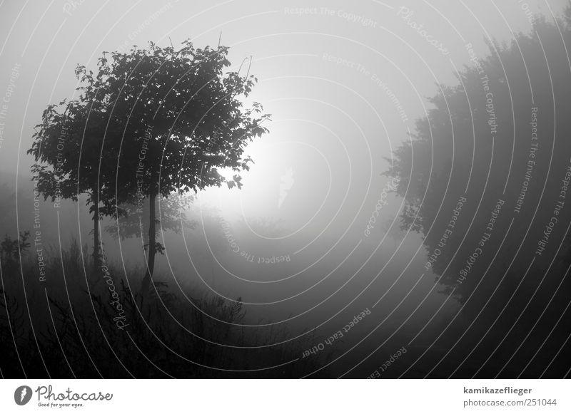 morgenGrauen Natur Landschaft Sonnenaufgang Sonnenuntergang Herbst schlechtes Wetter Nebel Baum Wald Gefühle Stimmung demütig Traurigkeit Sehnsucht Umwelt