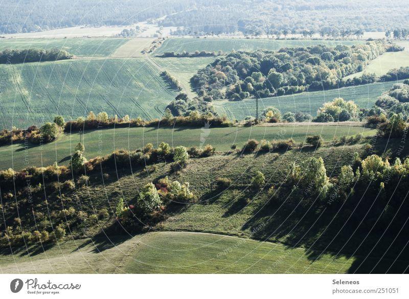 grün grün grün Tourismus Ausflug Ferne Sommer Landwirtschaft Forstwirtschaft Umwelt Natur Schönes Wetter Pflanze Gras Grünpflanze Nutzpflanze Wiese Feld Wald