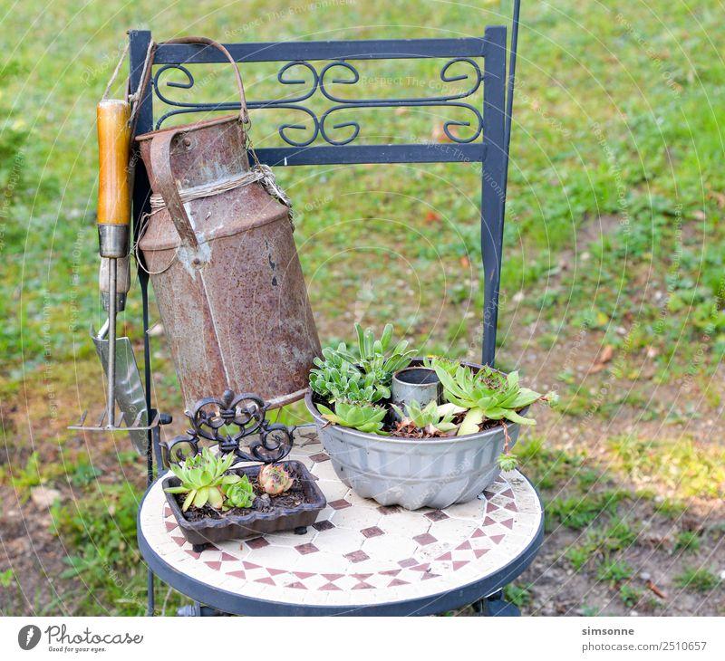 Hauswurzpflanzen als Deko auf einem Stuhl Freizeit & Hobby Garten Pflanze Blüte viele Verschiedenheit Töpfen Kannen sammlung reihe Mini-Staude terakotta Tontopf