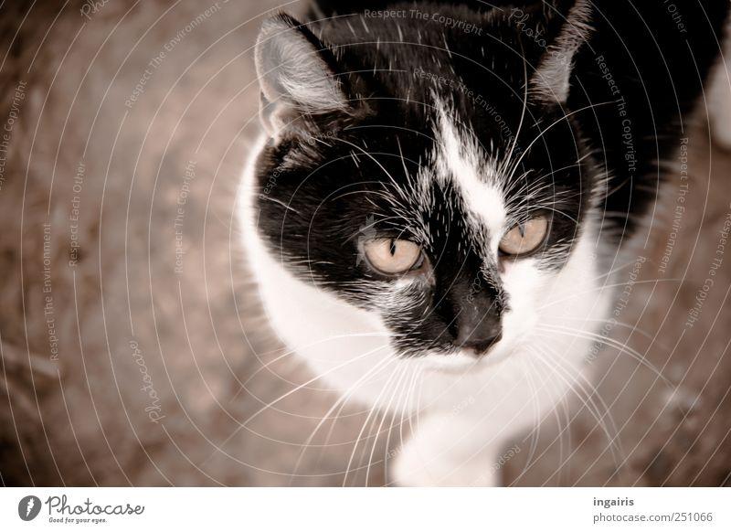 Leckerli in der Tasch? Tier Haustier Katze 1 entdecken Blick stehen warten frech natürlich Neugier niedlich Stimmung Interesse Tiergesicht Kopf anhänglich