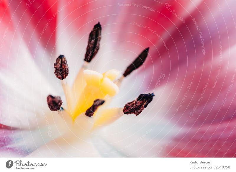 Nahaufnahme Details der rosa Tulpenblume schön Sommer Garten Feste & Feiern Valentinstag Muttertag Geburtstag Natur Pflanze Frühling Schönes Wetter Blume Blüte