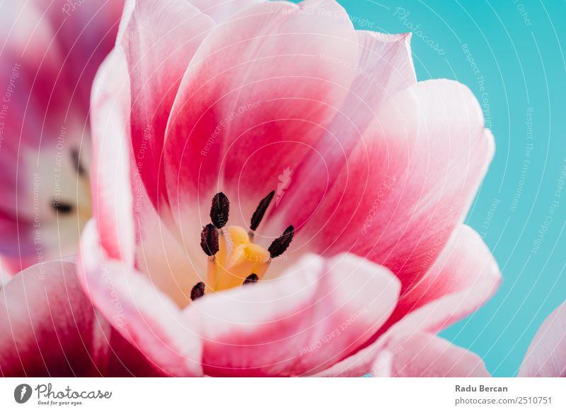 Natur Sommer Pflanze blau schön Farbe weiß Blume rot gelb Liebe Frühling Blüte natürlich Garten Feste & Feiern