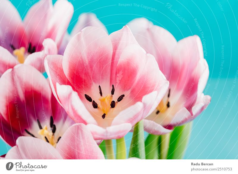 Natur Sommer Pflanze blau schön Farbe grün weiß Blume rot gelb Liebe Frühling Blüte natürlich Glück
