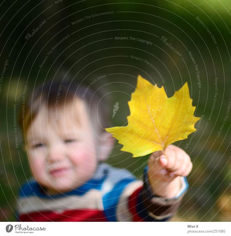Platane Mensch Hand Blatt Gesicht gelb Herbst klein Kindheit Baby Finger niedlich festhalten Kleinkind zeigen Herbstlaub finden