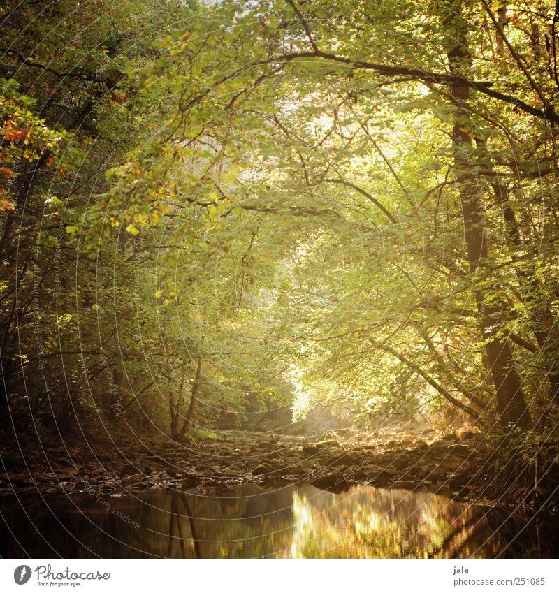 CHAMANSÜLZ | zauberwald Natur grün Baum Pflanze Wald Herbst Umwelt Landschaft braun gold natürlich Bach Grünpflanze Wildpflanze