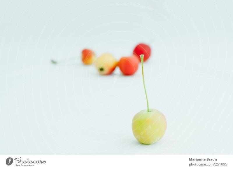 wilde Äpfel Lebensmittel Frucht Apfel Kugel süß gelb grün rosa rot schwarz Farbe genießen klein saftig Ernte lecker reif schön Natur Makroaufnahme Ernährung