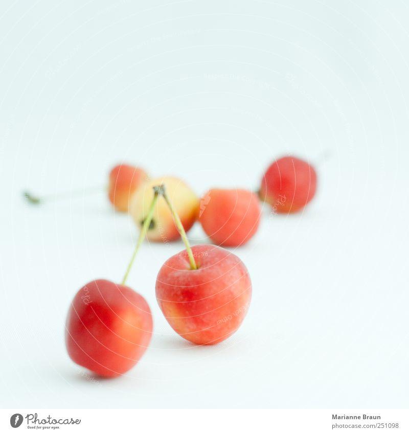 wilde Äpfel Natur grün schön rot schwarz gelb Ernährung Lebensmittel klein Frucht süß rund Apfel Kugel lecker