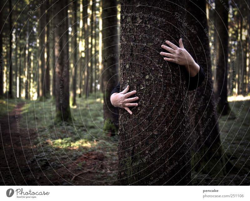 baumfreundschaft Natur Baum Einsamkeit ruhig Wald Umwelt Landschaft träumen Zusammensein wandern authentisch Häusliches Leben gut Sicherheit Kommunizieren stark