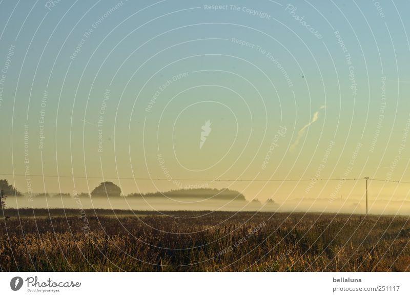 Silberstreif am Horizont Natur Landschaft Himmel Wolkenloser Himmel Sonnenaufgang Sonnenuntergang Herbst Nebel Feld hell Strommast Hochspannungsleitung