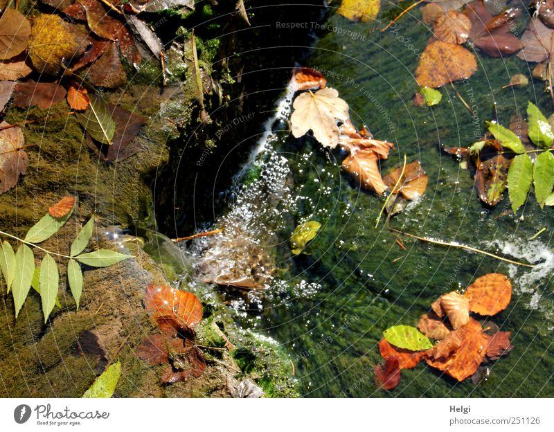 Chamansülz | bunter Herbst... Natur Wasser grün Pflanze Blatt Einsamkeit gelb Herbst Berge u. Gebirge Umwelt Landschaft Bewegung braun nass glänzend Felsen