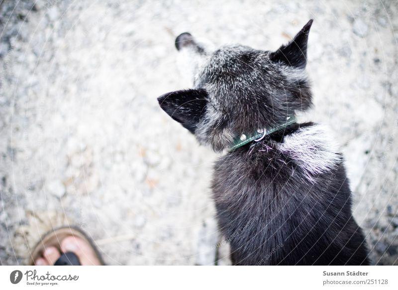 [CHAMANSÜLZ 2011] Axel alt Tier grau Hund klein Fuß Freundschaft Schuhe Freizeit & Hobby warten beobachten hören Wachsamkeit Haustier Kies Männlicher Senior
