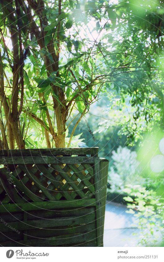 garden Umwelt Sommer Schönes Wetter Pflanze Baum Sträucher Garten natürlich grün Zaun Sichtschutz Farbfoto Außenaufnahme Menschenleer Tag Licht Lichterscheinung
