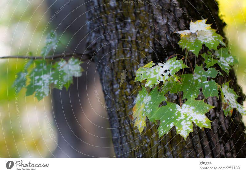 Nature beside Industry [CHAMANSÜLZ 2011] Umwelt Pflanze Baum Blatt grün weiß Pilzbefall Loch befallen Baumrinde scheckig gefleckt Tod Fleck Waldstück Farbfoto