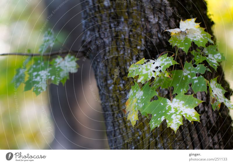 Nature beside Industry [CHAMANSÜLZ 2011] weiß grün Baum Pflanze Blatt Umwelt Tod Loch Pilz Fleck Baumrinde scheckig gefleckt Baumstamm