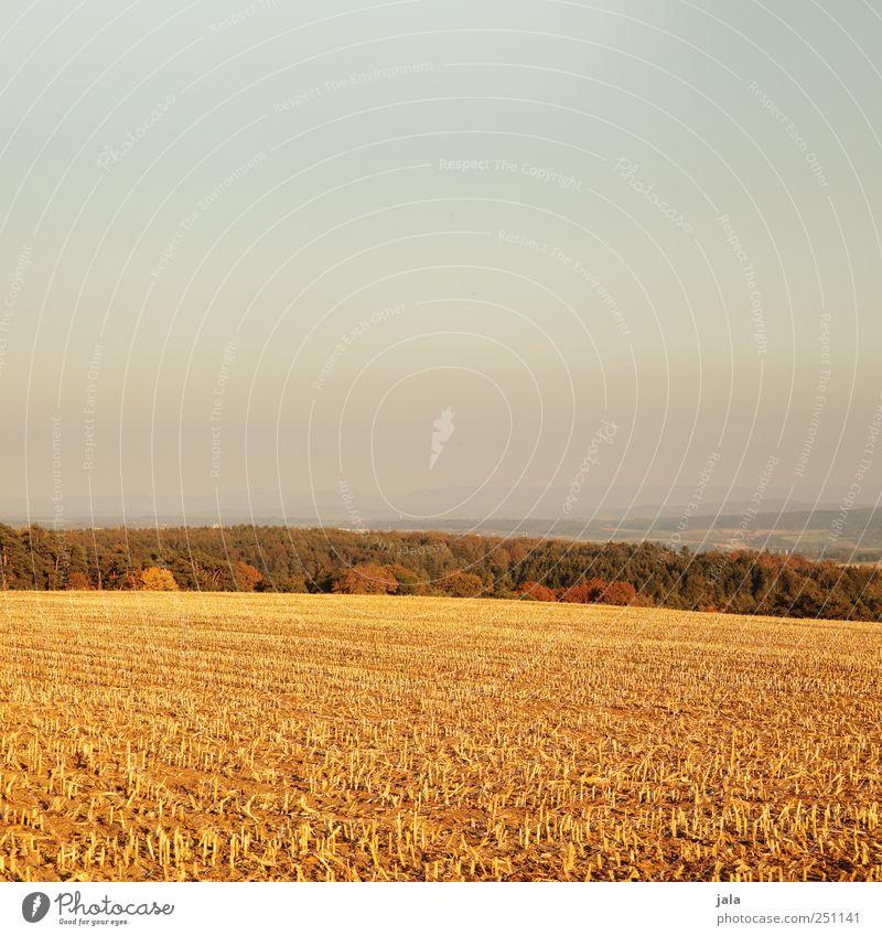 CHAMANSÜLZ | güldener herbst Himmel Natur Baum Pflanze Wald Herbst Umwelt Landschaft Gras Feld gold natürlich Nutzpflanze Wildpflanze