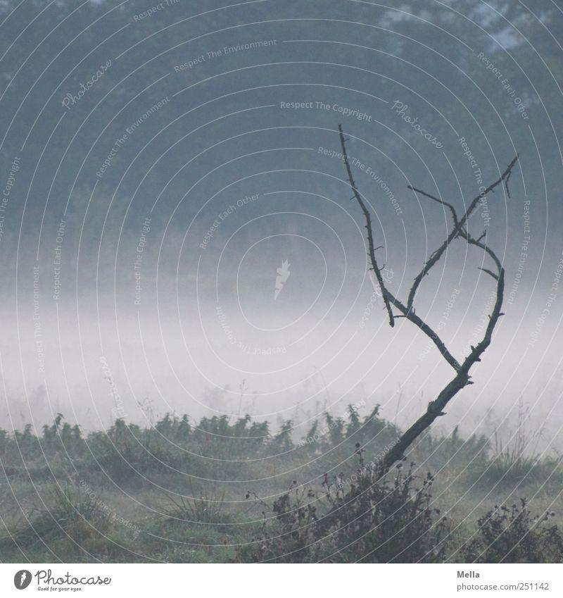 sehr früh Natur blau ruhig Umwelt Landschaft Zeit Nebel natürlich Klima Vergänglichkeit Ast Verfall bizarr dehydrieren