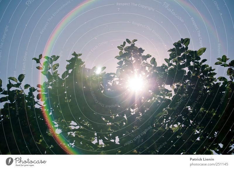 CHAMANSÜLZ | I need sunglasses Himmel Natur Baum Pflanze Sonne Sommer Blatt Umwelt Landschaft hell Wetter hoch Klima Urelemente Mitte Ring