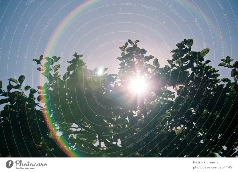 CHAMANSÜLZ | I need sunglasses Umwelt Natur Landschaft Pflanze Urelemente Himmel Wolkenloser Himmel Sonne Sonnenlicht Sommer Klima Wetter Baum hell hoch blenden