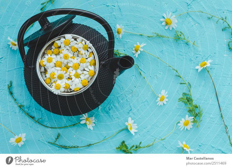 Frische Blumen und Kamillenpflanzen in der Teekanne auf blauem Hintergrund Kräuter & Gewürze Heißgetränk Behandlung Medikament Wohlgefühl Erholung ruhig Sommer