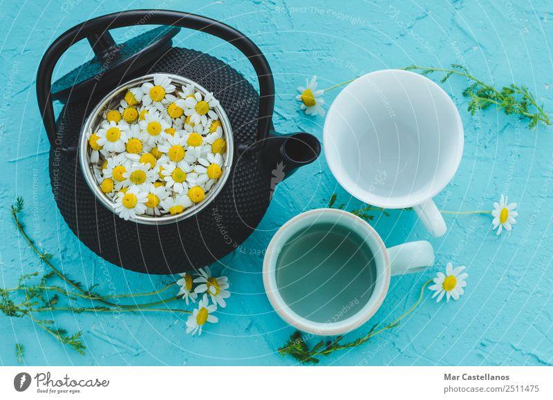 Frische Kamillenblüten in der Teekanne auf blauem Hintergrund Kräuter & Gewürze Heißgetränk Becher Behandlung Medikament Erholung ruhig Sommer Tisch Umwelt