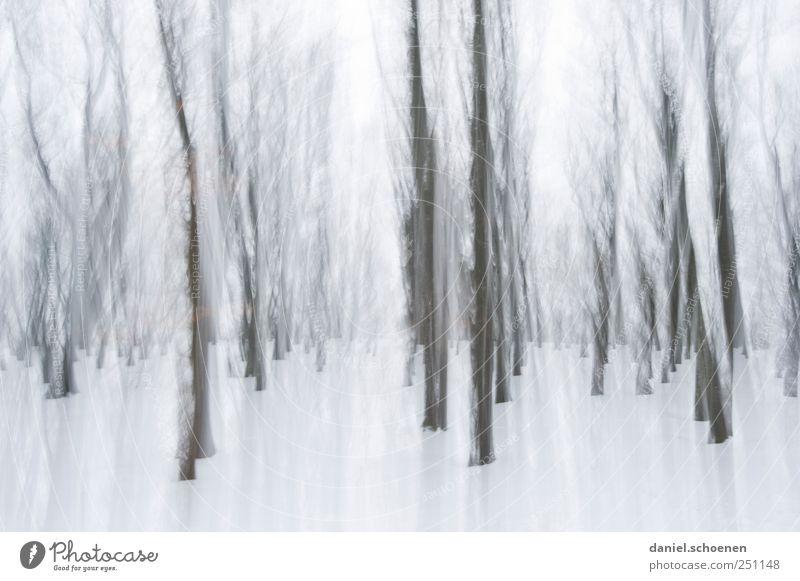 bewegter Winterwald Umwelt Natur Wind Eis Frost Schnee Wald grau weiß Schwarzwald Bewegung Gedeckte Farben Experiment abstrakt Licht Schatten