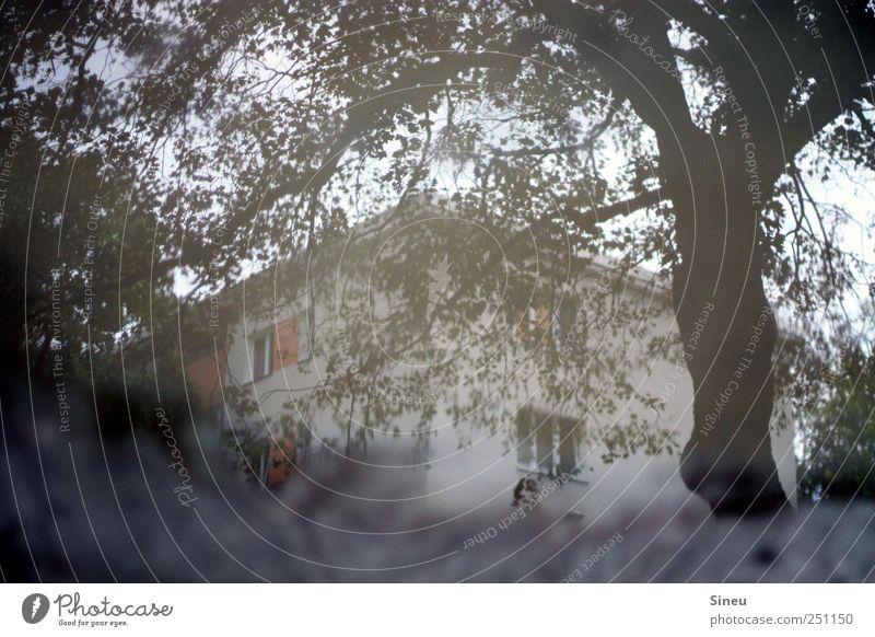 Wasserschloss Baum Blatt Haus grau nass Pfütze Geäst Bildausschnitt Anschnitt trüb Spiegelbild Wasseroberfläche Stadthaus Wohnhaus Wasserspiegelung