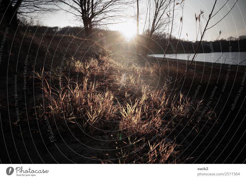 Uferlos Umwelt Natur Landschaft Himmel Horizont Sonne Frühling Schönes Wetter Baum Gras Sträucher Zweige u. Äste Küste Strand See leuchten Idylle Farbfoto