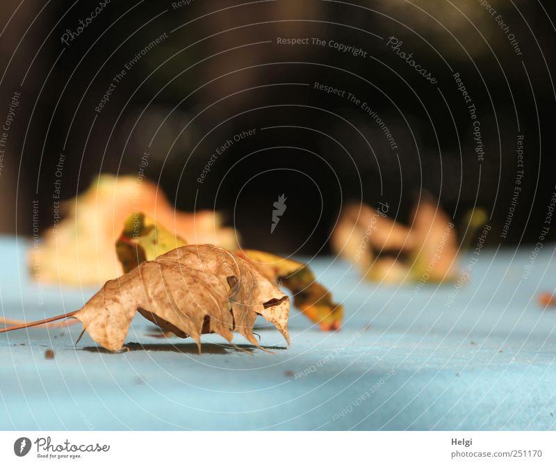 Chamansülz | alles ist vergänglich... Natur blau Pflanze Blatt ruhig Einsamkeit schwarz Leben Herbst Umwelt Stimmung braun liegen ästhetisch natürlich