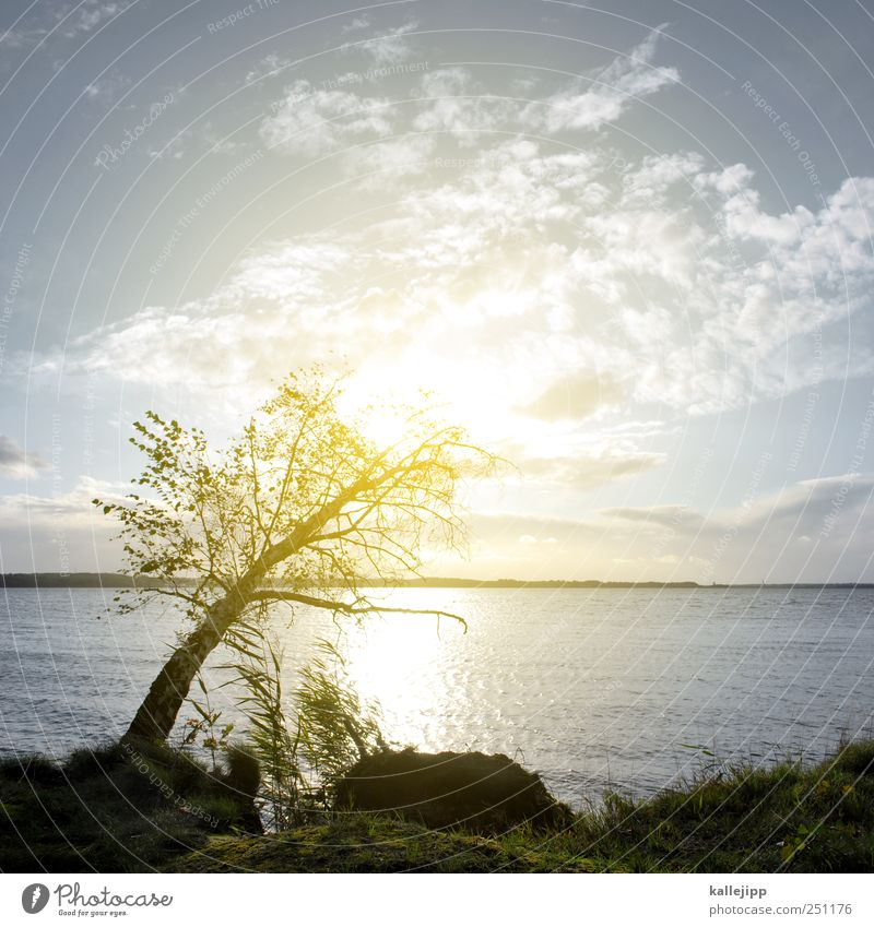 lichtpause Umwelt Natur Landschaft Pflanze Baum Gras Sträucher Moos Küste Seeufer Ostsee nachhaltig Birke Klippe Tod Farbfoto Außenaufnahme Menschenleer Licht