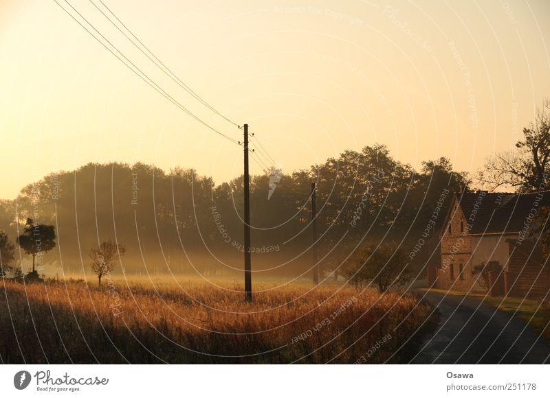 Kossenblatt Natur Landschaft Himmel Wolkenloser Himmel Sonnenaufgang Sonnenuntergang Herbst Schönes Wetter Nebel Baum Gras Sträucher Feld Weide Deutschland Dorf