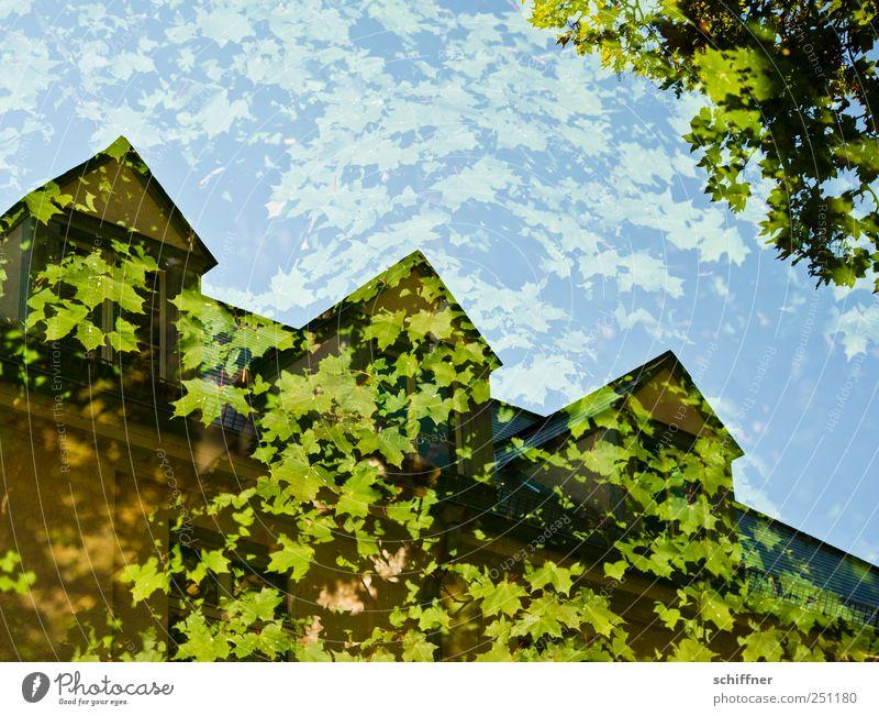 Chamansülz | Baumhaus I grün Blatt Haus Fenster Gebäude Dach Bauwerk Doppelbelichtung ökologisch Ahorn Grünpflanze Ahornblatt Blätterdach Dachgaube
