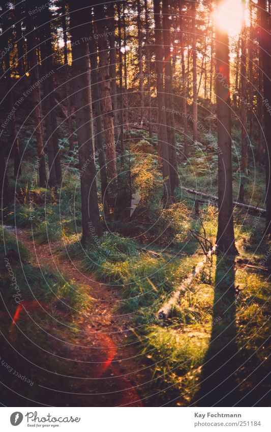 ° Ferien & Urlaub & Reisen Ausflug Freiheit Sommerurlaub wandern Natur Pflanze Schönes Wetter Baum Gras Sträucher Kiefer Wald Wege & Pfade atmen Erholung