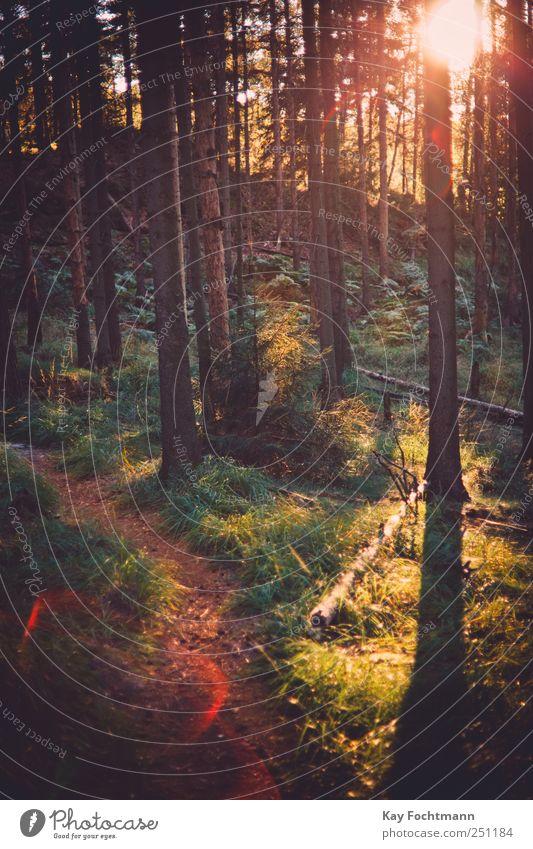 ° Natur Baum Pflanze Sommer Ferien & Urlaub & Reisen Wald Erholung Freiheit Gras Bewegung Wege & Pfade Zufriedenheit Ausflug wandern Abenteuer Energie