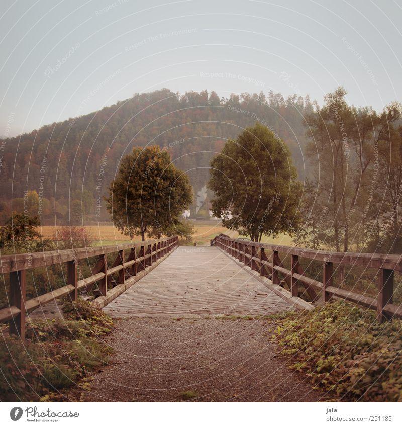 CHAMANSÜLZ | die alte brücke Natur Baum Pflanze Umwelt Landschaft Gras natürlich Brücke Sträucher Bauwerk Grünpflanze Wildpflanze