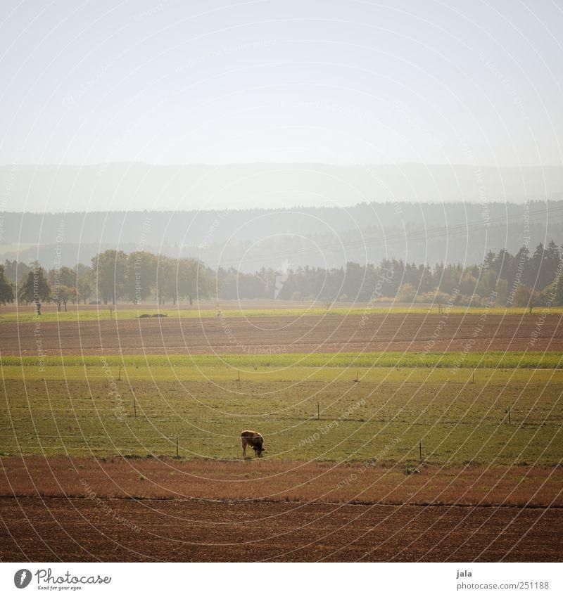 CHAMANSÜLZ | weites land Umwelt Natur Landschaft Pflanze Tier Himmel Baum Gras Wiese Feld Berge u. Gebirge Nutztier Kuh 1 natürlich Farbfoto Außenaufnahme