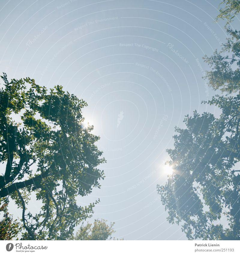 CHAMANSÜLZ | Saturday Sun Sommer Sonne Umwelt Natur Landschaft Pflanze Urelemente Himmel Wolkenloser Himmel Klima Wetter Baum Blatt hell hoch einzigartig
