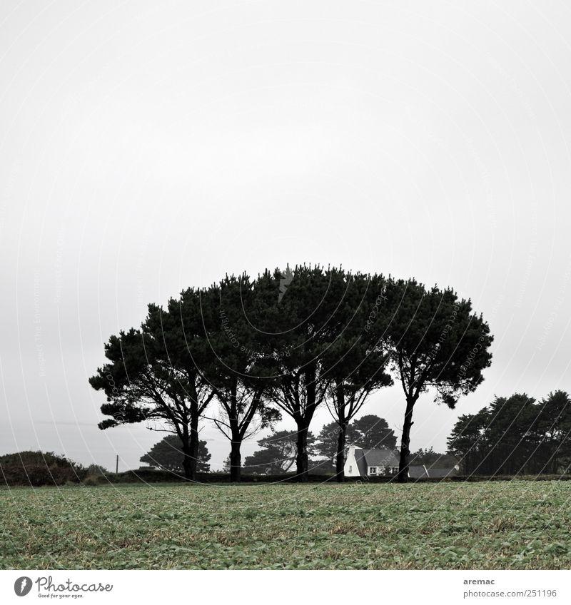Wetterschutz Himmel Natur Baum ruhig Landschaft grau Feld trist Dorf Frankreich schlechtes Wetter Einfamilienhaus Bretagne