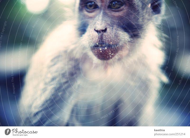 im essensrausch Sommer Ferien & Urlaub & Reisen Tier Ferne Ernährung Umwelt Haare & Frisuren Mund Kraft Frucht Ausflug Nase Abenteuer Tourismus bedrohlich Zähne