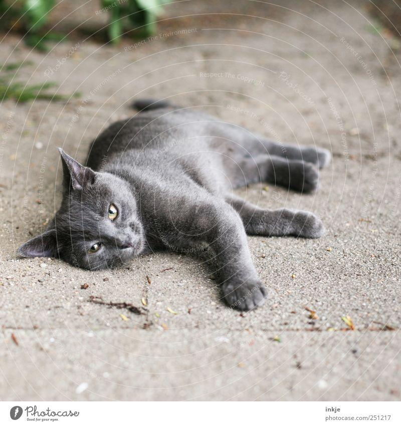 kann man denn nichtmal fünf Minuten in Ruhe rumliegen...? Tier Erholung Gefühle grau Denken Stimmung Katze Tiergesicht Gelassenheit Müdigkeit Haustier bequem